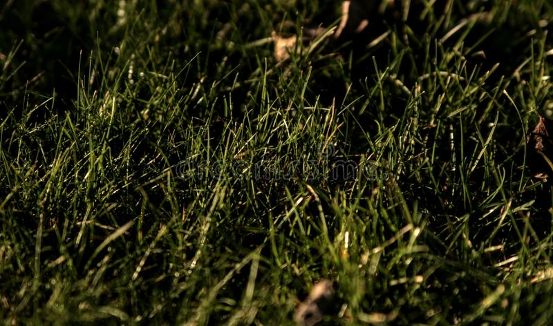 grass green nature plants background stock photos