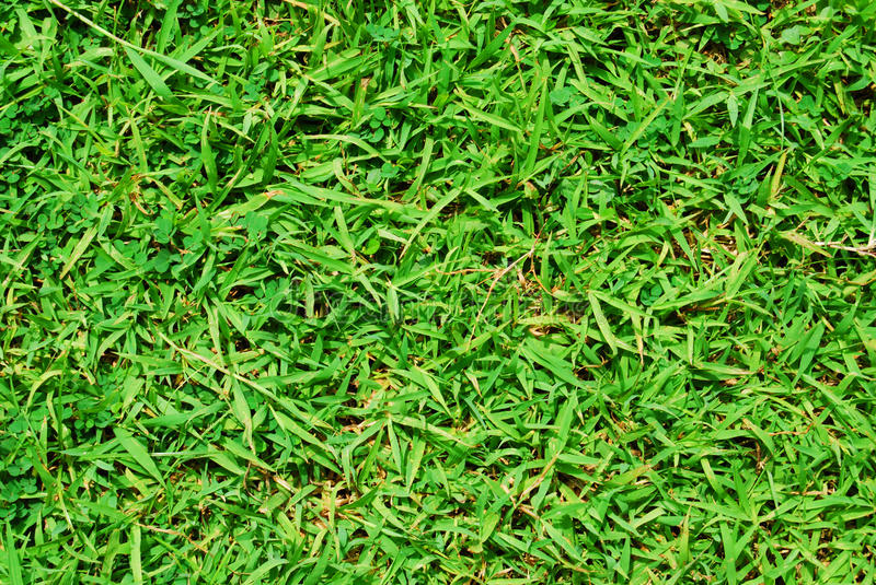 Grass Green Nature royalty free stock images
