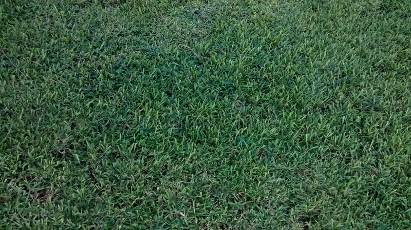 Grass groomed royalty free stock photography