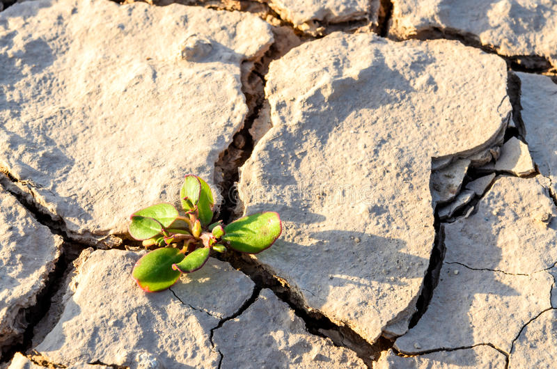 Grass grow up in dry soil stock photo