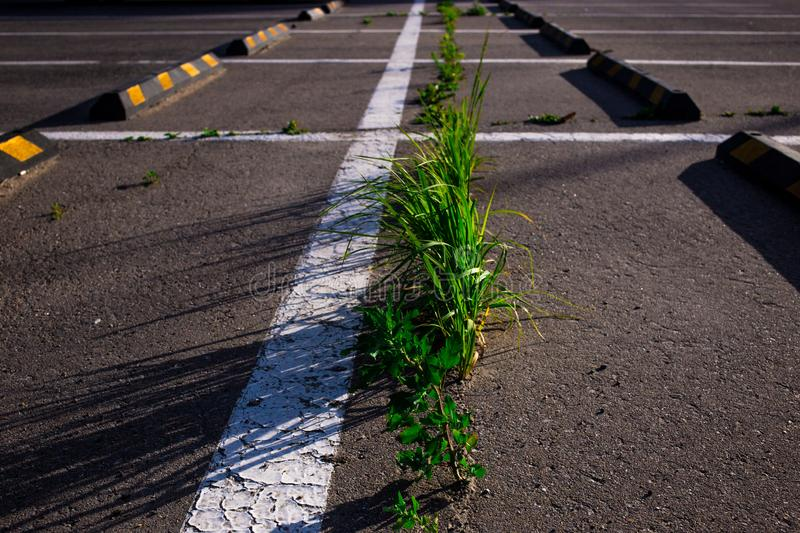 grass growing through the asphalt in the Parking lot in summer royalty free stock images
