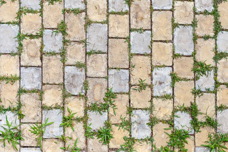 Grass growing through the cobble stones stock image