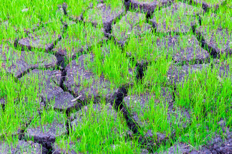 Grass growing on the dry cracked earth royalty free stock images