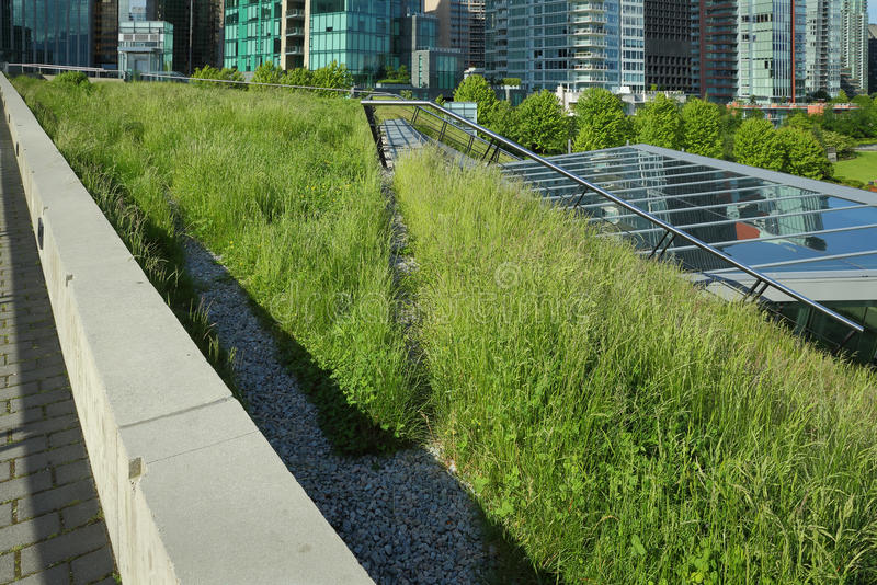 Grass Growing on a Green Roof. A portion of the new Vancouver Convention Center environmentally friendly, lush, 6 acre green roof stock photos