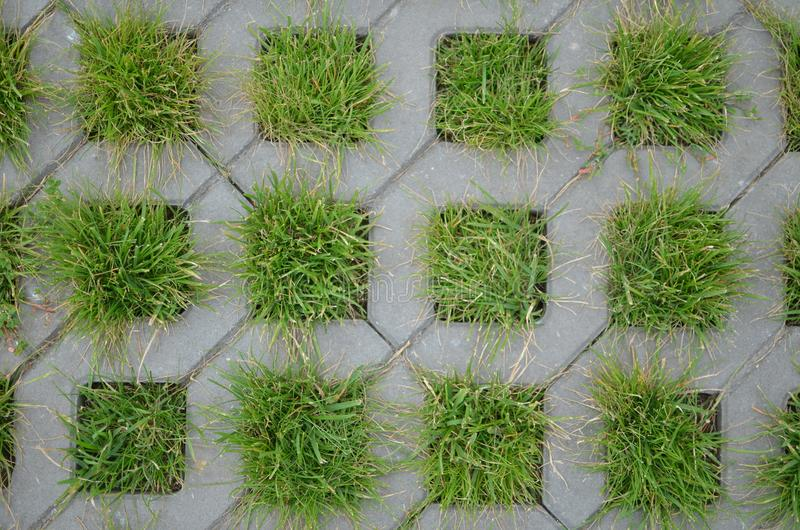 Grass growing through a lattice stock photo