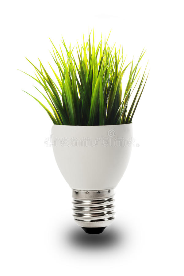 Grass growing out of a bulb royalty free stock photos