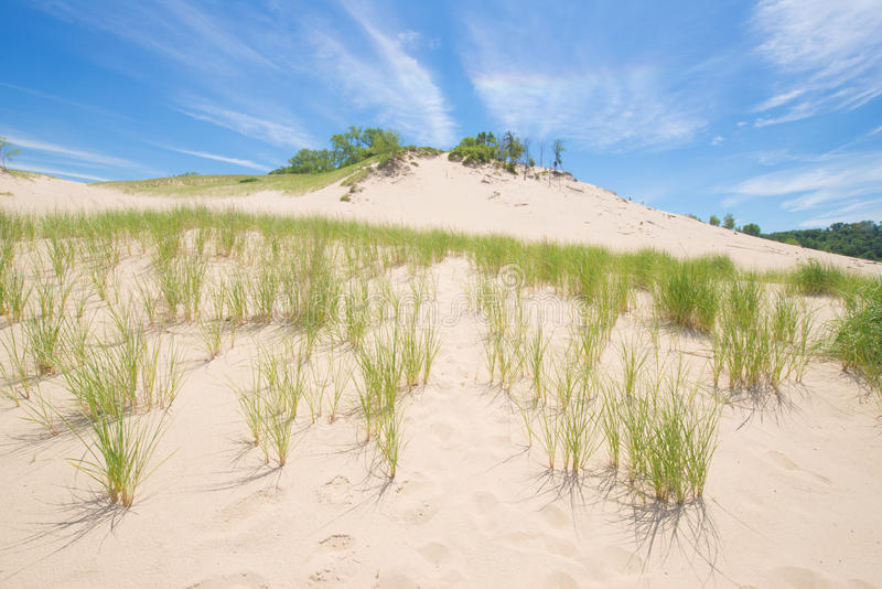 Grass growing on a sand dune stock photos