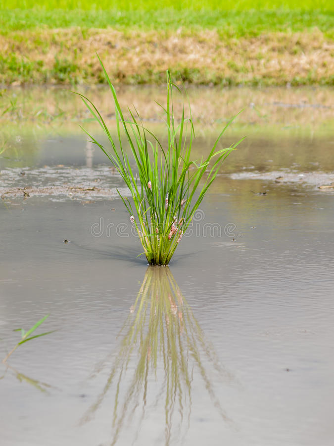 Download Grass grows stock image. Image of grass, summer, flora - 27054523