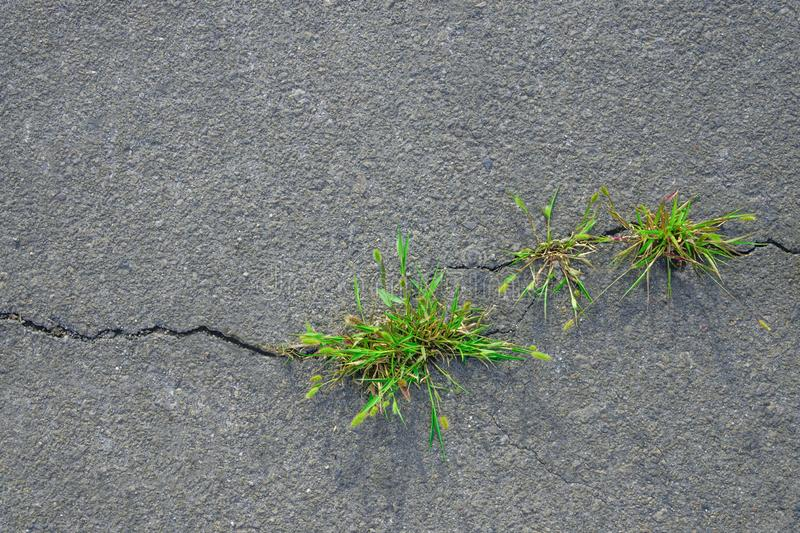 Grass grows in asphalt crack royalty free stock photography