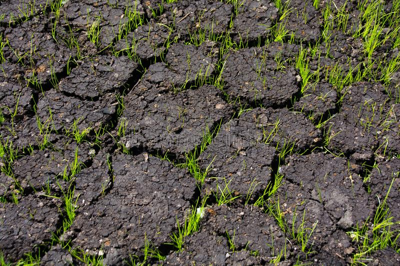 Grass grows through cracks in the ground. Spring royalty free stock images