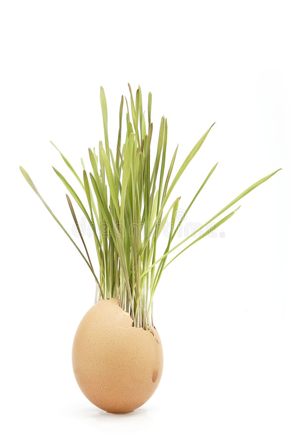 Download Grass grows in egg stock photo. Image of seasonal, flora - 9141120