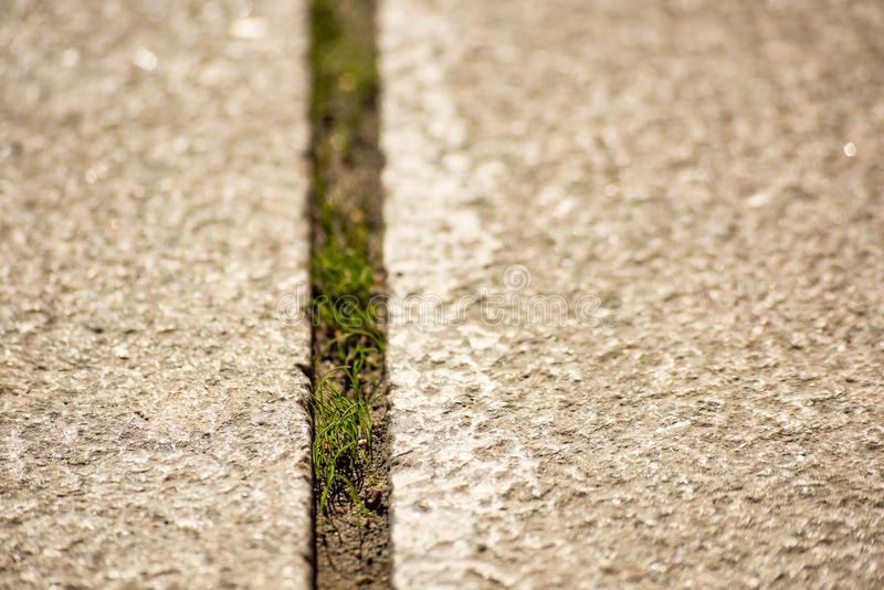 Grass grows through the surface of the road royalty free stock images