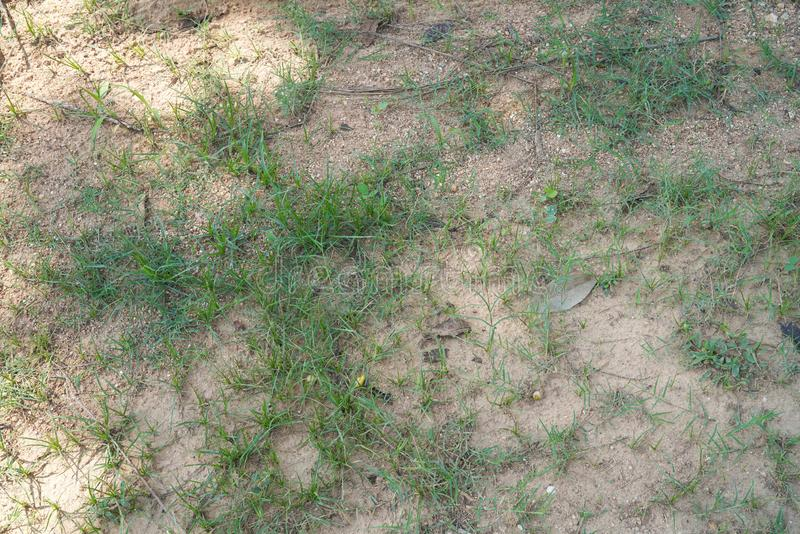 Grass growth on the floor. Grass growth on the soil floor stock images