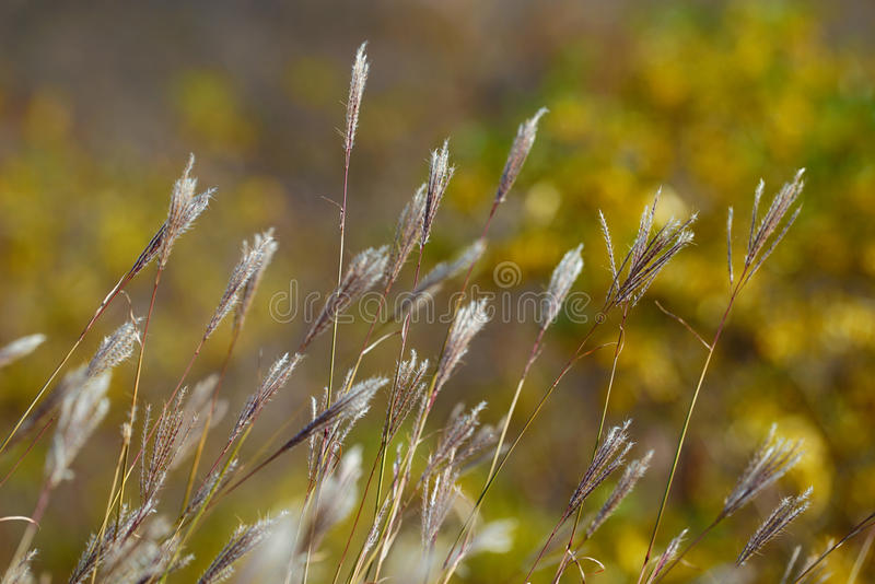 Grass and herbs royalty free stock photography