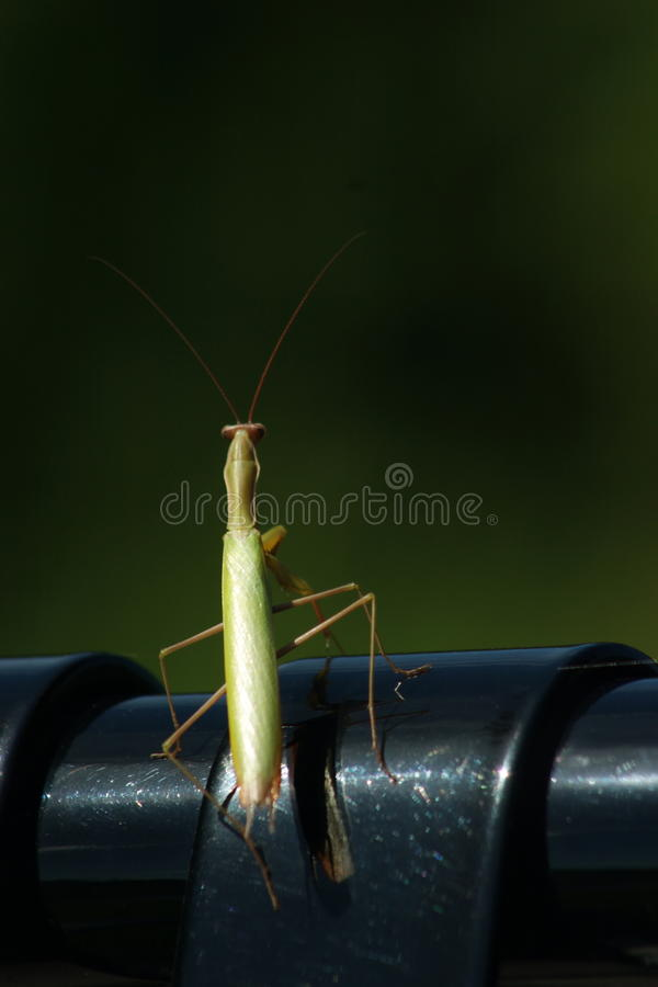 Grass hopper on bench. A grass hopper sitting on the edge of a black metal bench royalty free stock image