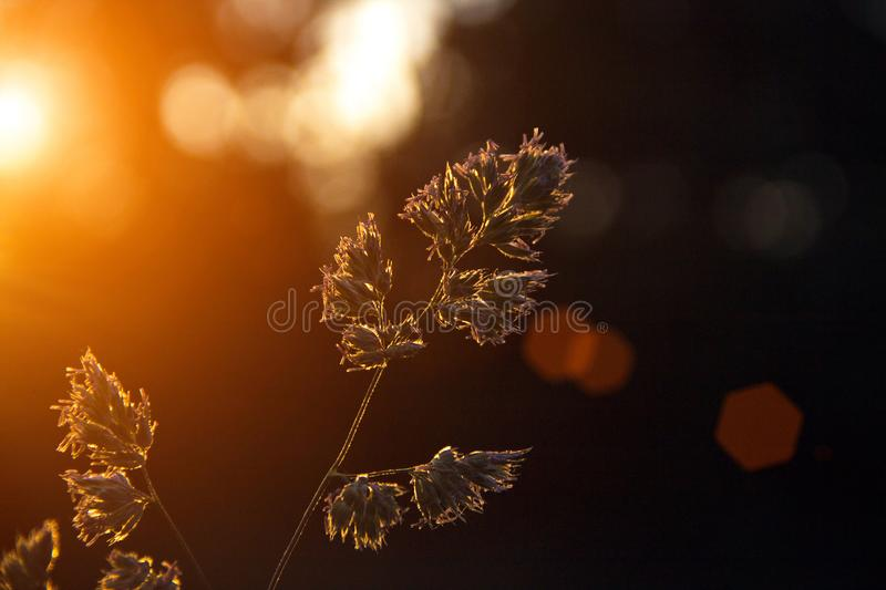 Grass illuminated by bright sun rays, close-up, Fresh outdoor nature background royalty free stock photography