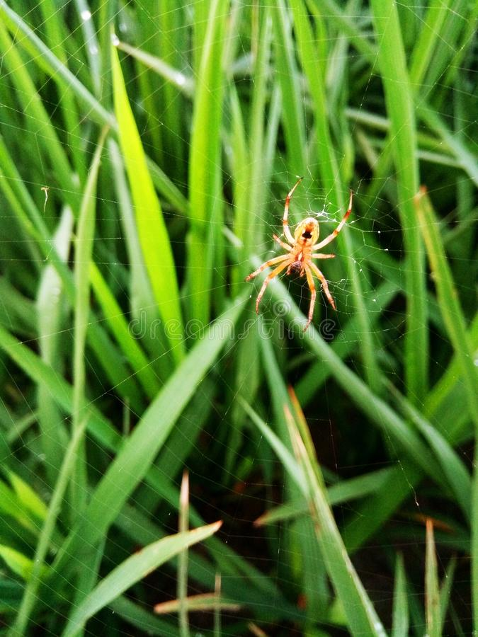 Grass, Insect, Invertebrate, Grass Family royalty free stock photo