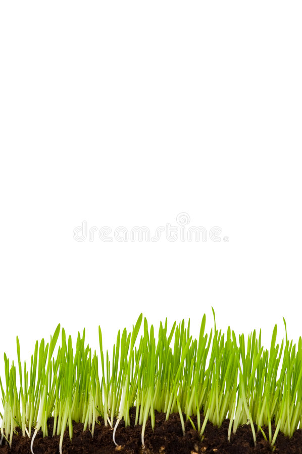 Free Grass Isolated Royalty Free Stock Photography - 4676187
