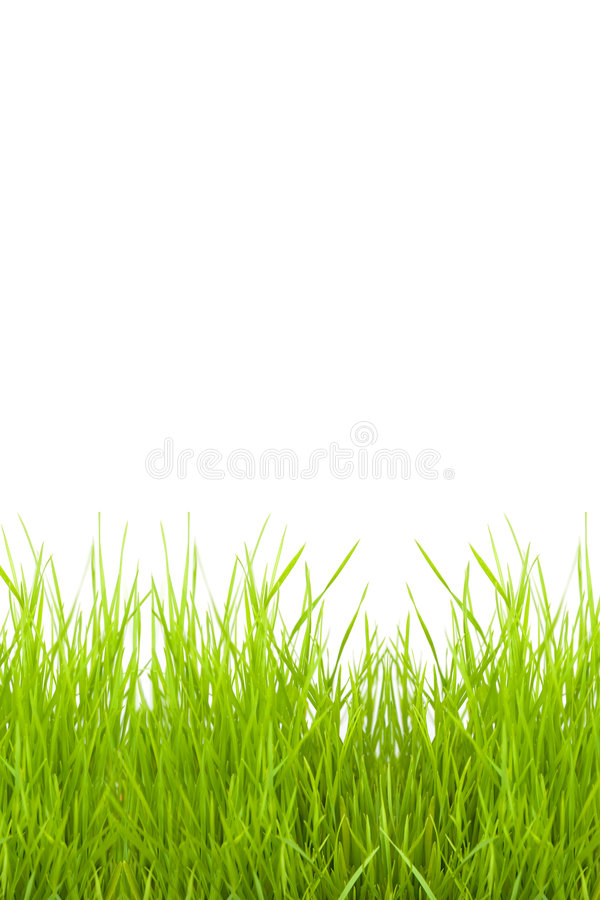 Grass isolated on a white. Background for a copy-space royalty free stock images