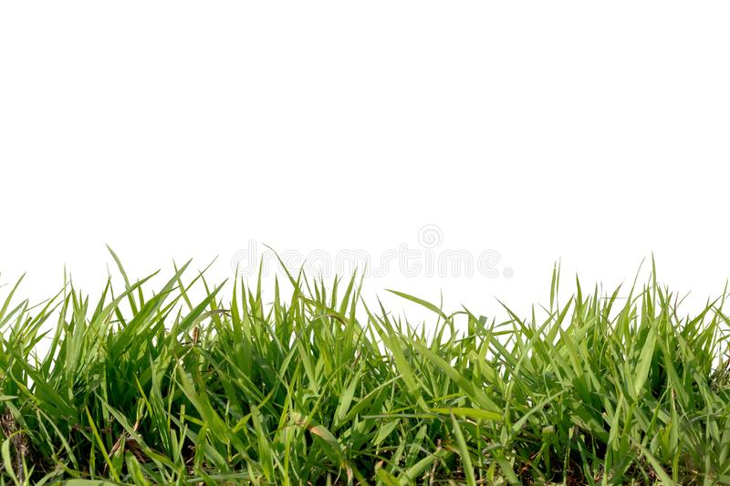 Grass isolated on white background. Green, nature, pattern, summer, color, field, meadow, natural, spring, plant, lawn, environment, horizontal, wild, foliage stock photos