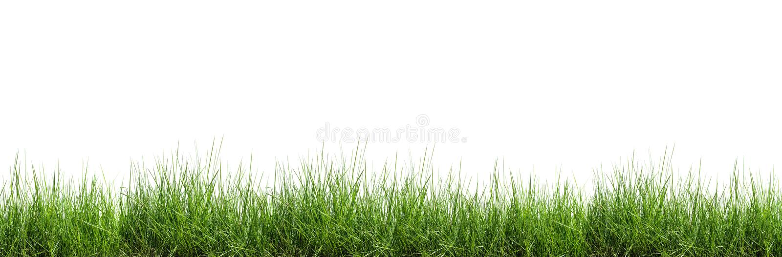 Grass isolated on white background royalty free stock photography