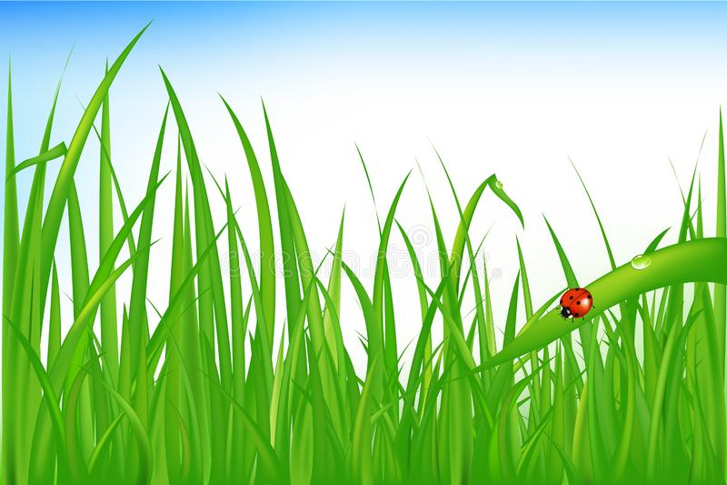 Download Grass With Ladybird. Vector Stock Vector - Illustration of macro, background: 14449413
