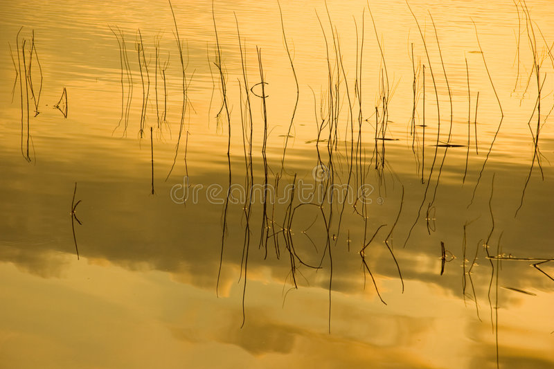 Grass lake refection in golden light.  stock photos