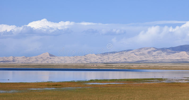 Grass land of Qinghai Lake, China royalty free stock images