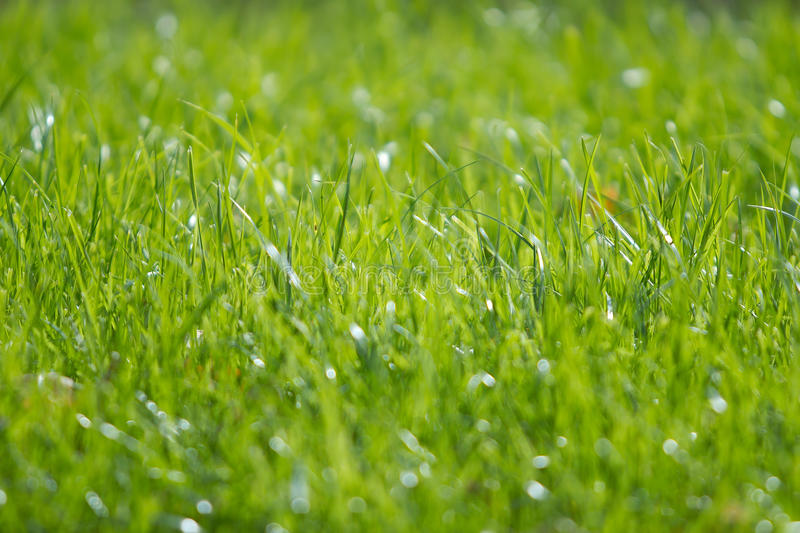 Grass on a lawn. New stock images