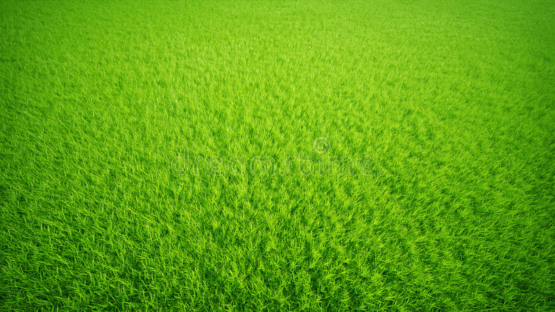 Grass lawn. stock image