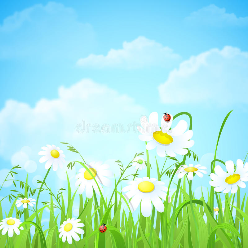 Grass lawn with chamomile vector background. Nice shiny fresh daisy chamomile flower grass lawn with bokeh blur effect sunshine beam background. Nature spring royalty free illustration