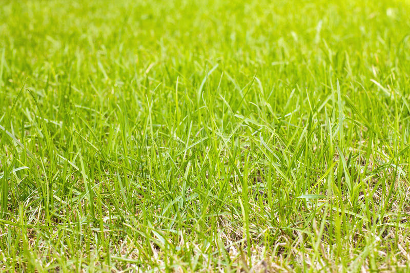 Grass on the lawn. Green grass on the lawn stock photos