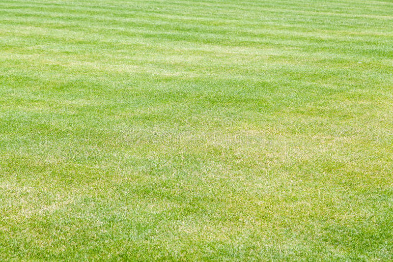 Grass lawn. Green cut grass lawn background with selective focus royalty free stock photography