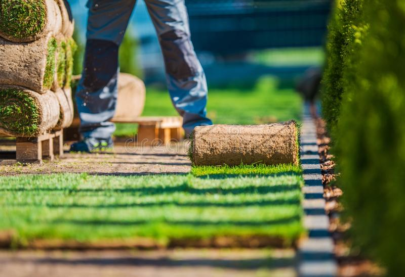 Grass Lawn Installation. Natural Grass Lawn Installation. Grass Turfs and the Professional Gardener in the Garden royalty free stock photography
