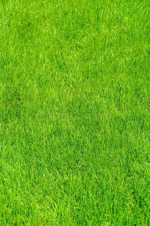 Grass lawn natural texture. Green grass background. Grass lawn natural texture. Green grass background royalty free stock photography
