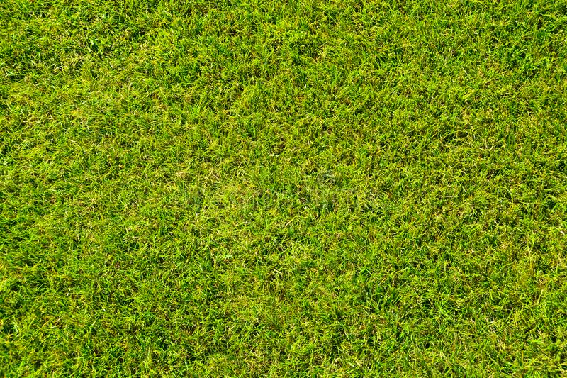 Grass lawn natural texture. Green grass background. Grass lawn natural texture. Green grass background stock photography
