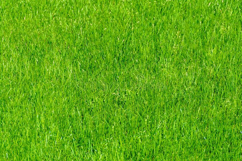 Grass lawn natural texture. Green grass background. Grass lawn natural texture. Green grass background stock image