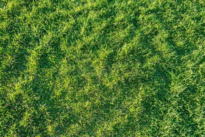 Grass lawn natural texture. Green grass background. Grass lawn natural texture. Green grass background stock photo