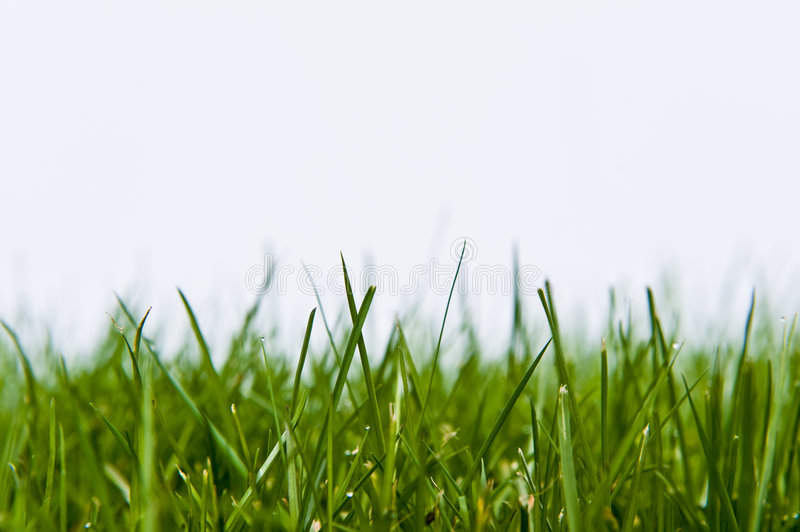 Grass Lawn on White. Green grass lawn foreground on white royalty free stock photo