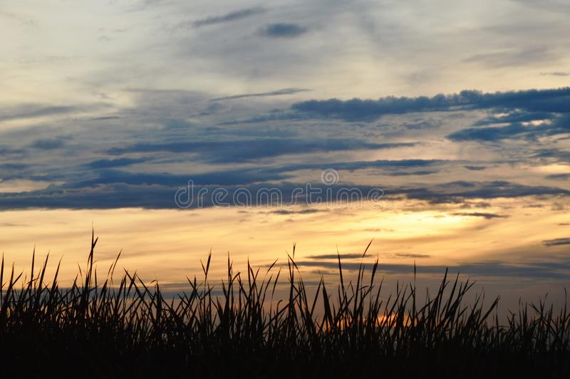 Grass leaf on sunset twilight sky background in Thailand countryside royalty free stock photography