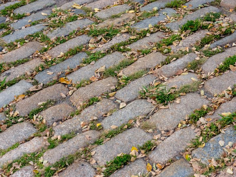 Grass and leafs overtaking cobblestone. On a fall day stock photos