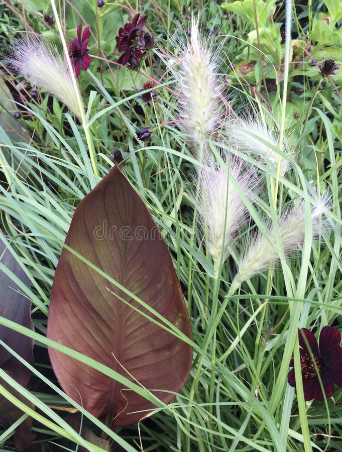 Grass&Leave obrazy royalty free