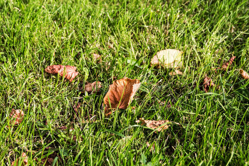 Download Grass with leaves stock image. Image of lush, brightly - 25894371