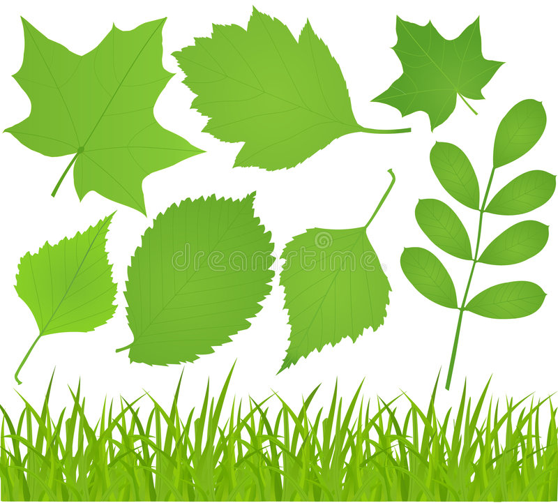 Download Grass and leaves stock vector. Image of grass, isolated - 8393730