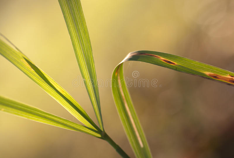 Download Grass stock image. Image of close, background, plant - 36983725