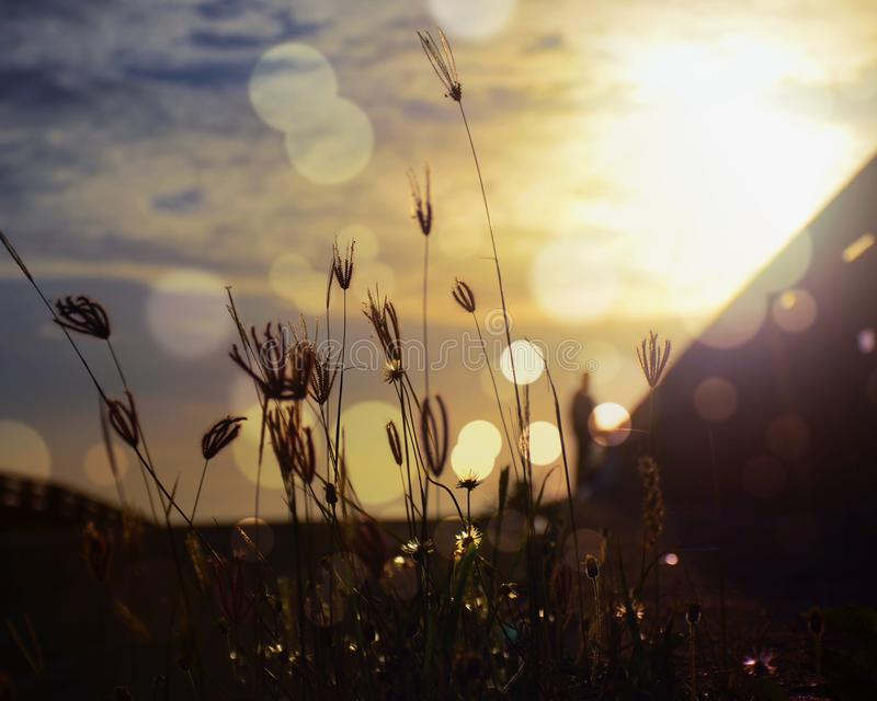Grass and light in the morning royalty free stock images