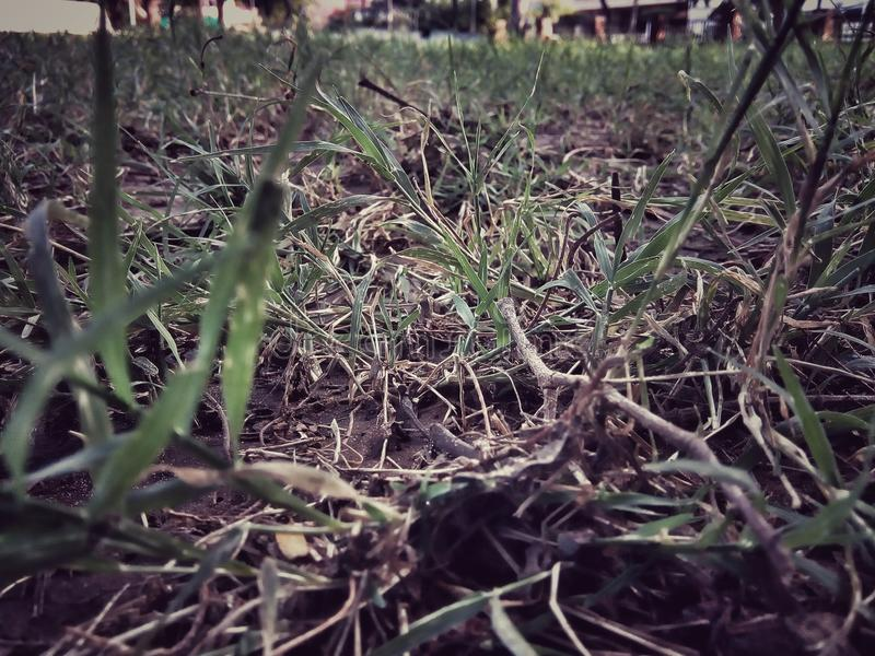 Grass with little hope stock image