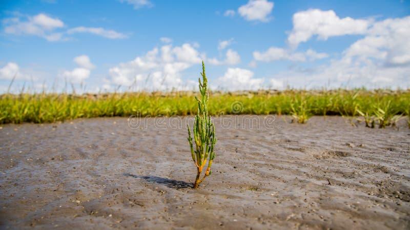 Grass on marsh royalty free stock image