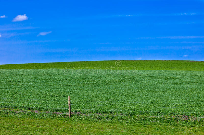 Download Grass Meadow Background Stock Photography - Image: 19267722