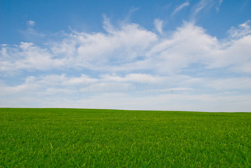 Grass Meadow and Blue Sky royalty free stock photos
